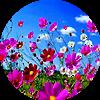 Аватар пользователя NataU