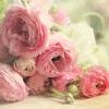 Аватар пользователя Ranunculus Pink