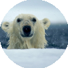 Аватар пользователя Syberia