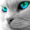Аватар пользователя Shadow