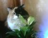 Аватар пользователя kulema