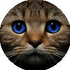 Аватар пользователя Julia_Sergeevna