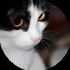 Аватар пользователя Екатерина 64