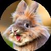 Аватар пользователя happyrabbit