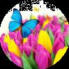 Аватар пользователя Mase4ka
