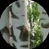 Аватар пользователя Кадр