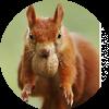 Аватар пользователя Ylina