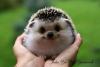 Аватар пользователя Hamster87