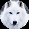 Аватар пользователя volk010