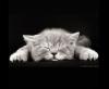 Аватар пользователя Mila41
