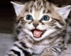 Аватар пользователя котенок