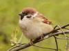 Аватар пользователя Sparrow