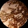 Аватар пользователя monika