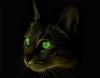 Аватар пользователя linsi