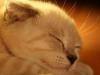 Пользователь Solarcat