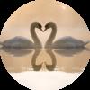 Аватар пользователя лебедь