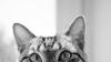 Аватар пользователя yulsensation