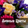 Организация «Дивные цветы»