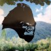 Джунгли парк