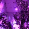 В квартире на Павла Шаманова жительница вырастила 14 кустов конопли