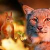 В Сысерти появились необычные «Рысь» и «Белка»