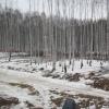 Жители района создали «штаб по спасению» Берёзовой рощи и объявили «народный сход»