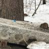 «Дети гоняются за грызунами по всему двору»: в 7 квартале образовался крысятник