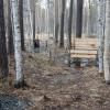 «Это самовольный захват земли»: в Юго-Западном лесопарке посреди берёз и сосен установили мангалы