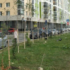 Жители дома на ул. Мехренцева посадили берёзовую аллею во втором квартале