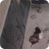 Осторожно, летучие мыши