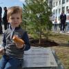 В Академическом появилась аллея, деревья на которой будут расти 800 лет