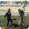 Семейное дерево (видео)