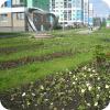 В Академическом посадили 15 тысяч цветов