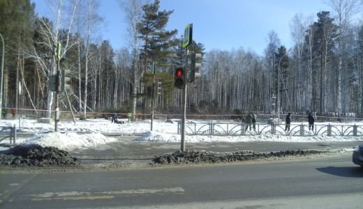 В Берёзовой Роще началась вырубка деревьев
