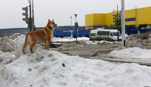 Идите в лес: где в Академическом выгуливать собак?
