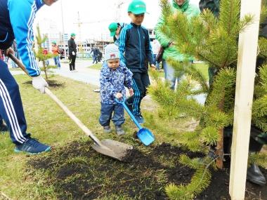 В Академическом прошли субботник и День посадки леса