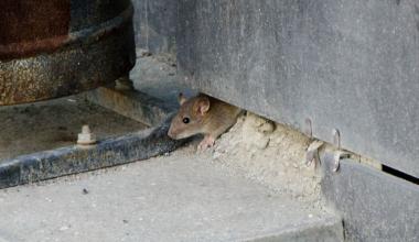 Жители дома на Вильгельма де Геннина жалуются на нашествие хвостатых «гостей»
