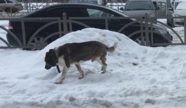 В Академическом ребёнок убегал от стаи бродячих собак и упал в яму