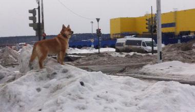 Владельцы собак проигнорировали субботник по уборке собачьих экскрементов