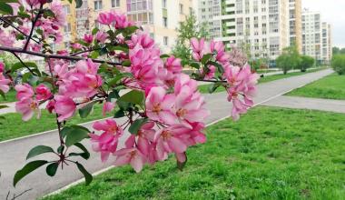 «Не дворы, а сплошная фотозона!»: весенний репортаж с улиц Академического