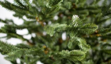 Ёлки на вынос! Где в Академическом принимают новогодние деревья для переработки?