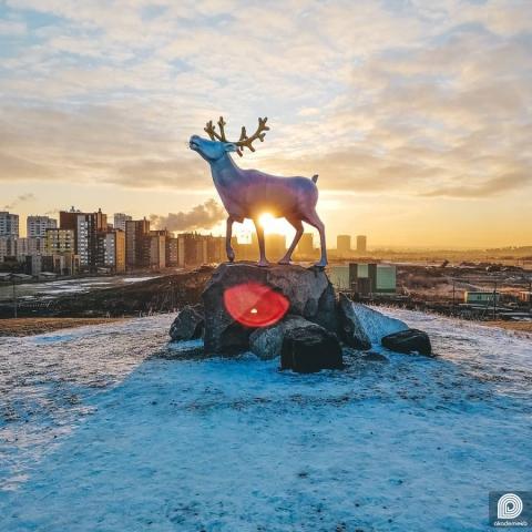 Северный олень в Преображенском парке на восходе солнца
