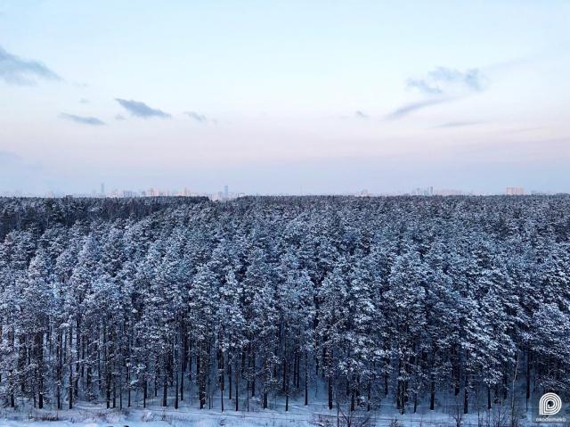 Лесной массив Юго-Западного лесопарка и вид на центр из Академического