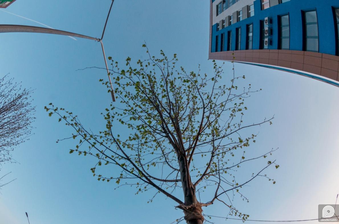 Более 20 лип высадили в нулевом квартале Академического