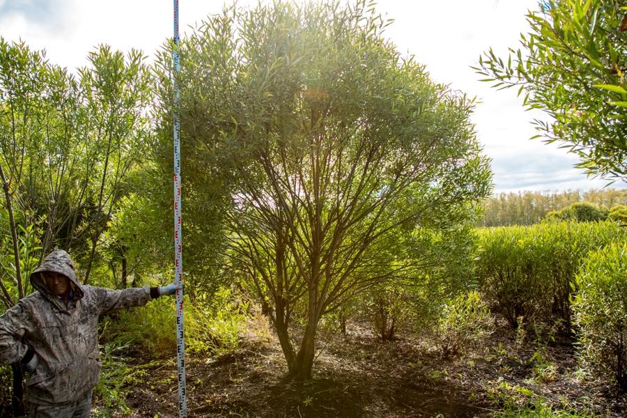 Застройщик рассказал детали проекта озеленения аллеи Преображенского парка