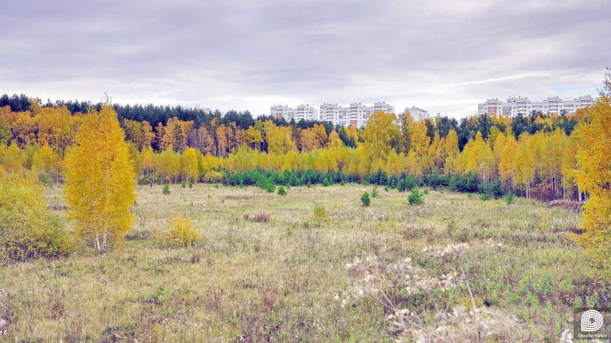 В лесу у дома Загрузки