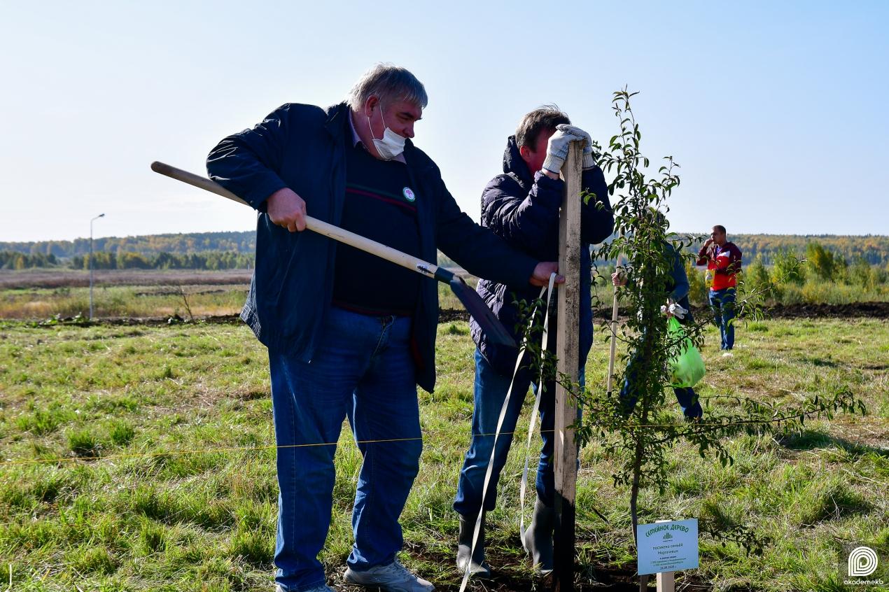 Около 700 деревьев высадили в Академическом районе