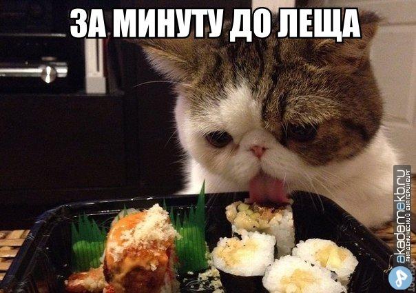 X9WqEUbKUmU Загрузки