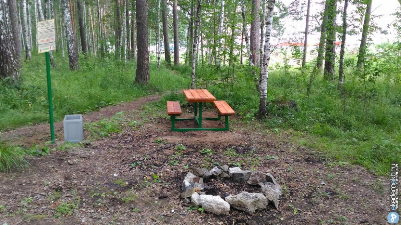 Итоги работы по сохранению Юго-Западного лесопарка обсудили на круглом столе